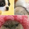 Tak Kee Pet Express